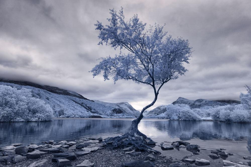 Zdjęcie fotografa David Hall, uczestnika konkursu fotografii w podczerwieni Life in Another Light