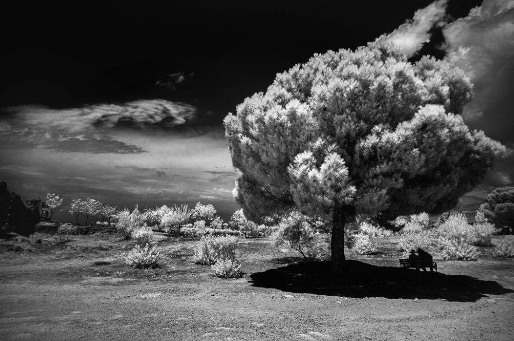 Zdjęcie fotografa Tatiany Aleynikovej, uczestniczki konkursu fotografii w podczerwieni Life in Another Light