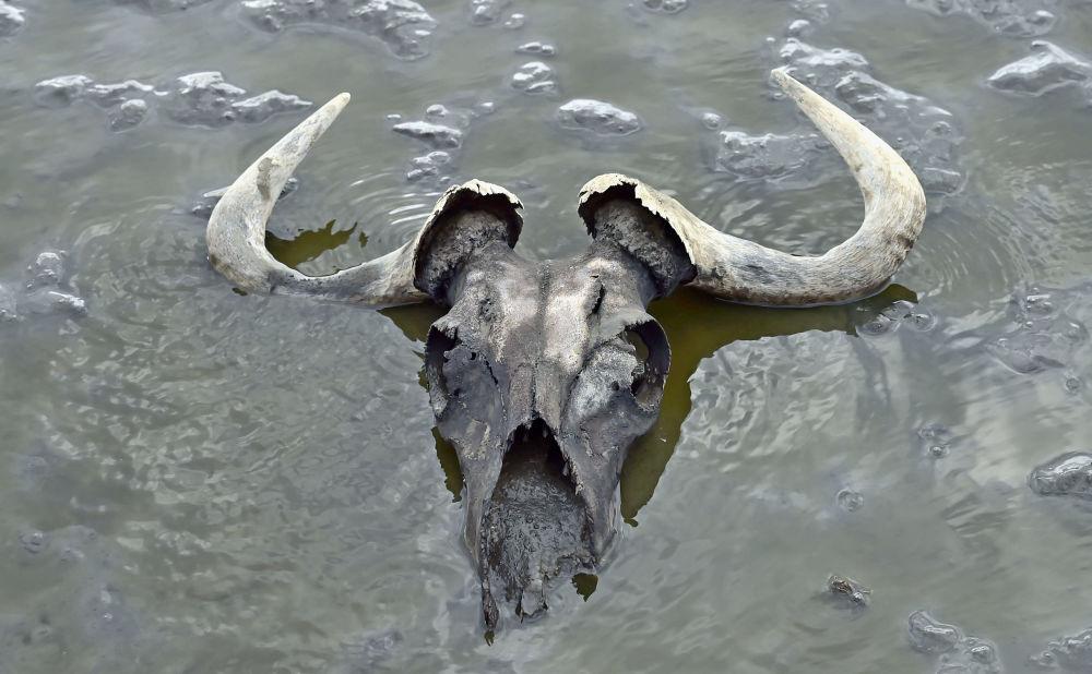 Natron – słone jezioro położone w Tanzanii