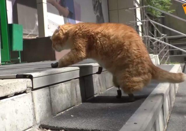 Kot bez łap