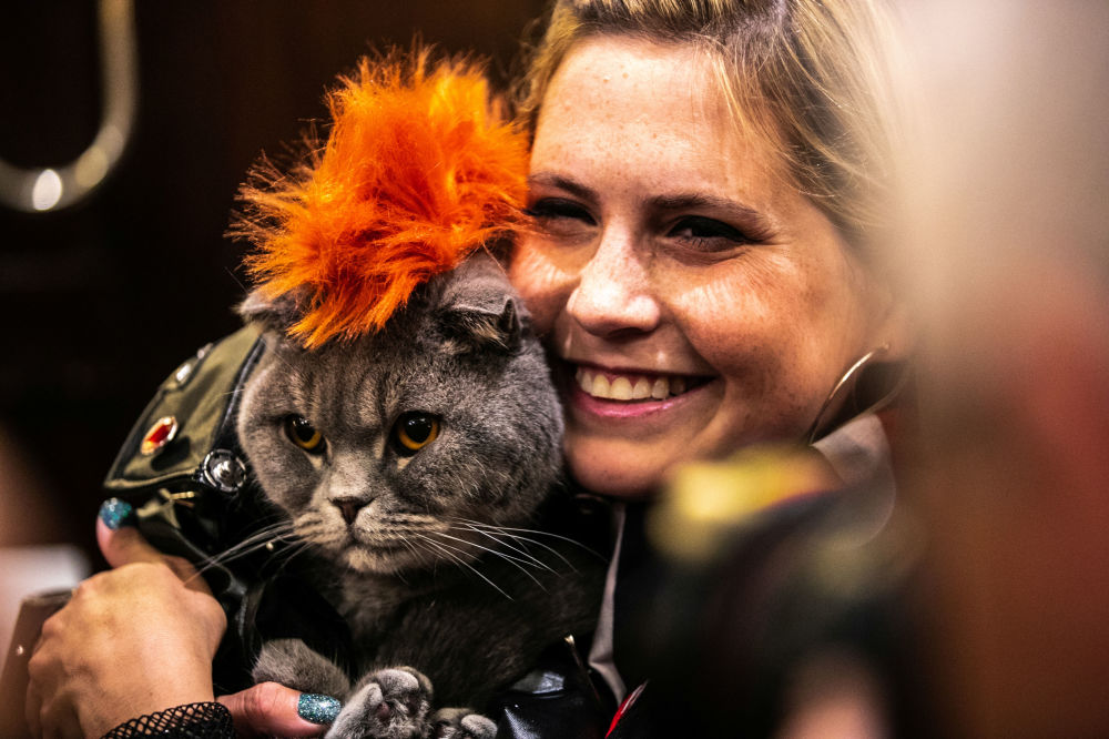 Kot Thunder Folds podczas pokazu mody Algonquin Hotel's Annual Cat Fashion Show w Nowym Jorku