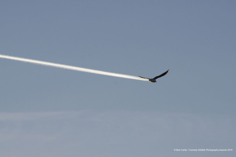 Czy to ptak czy samolot?