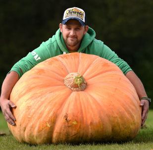 Richard Mann ze swoją dynią, która waży 310.7 kg wygrał konkurs Autumn Flower Show w 2017 roku