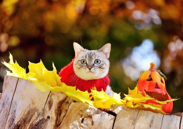 Kot w swetrze