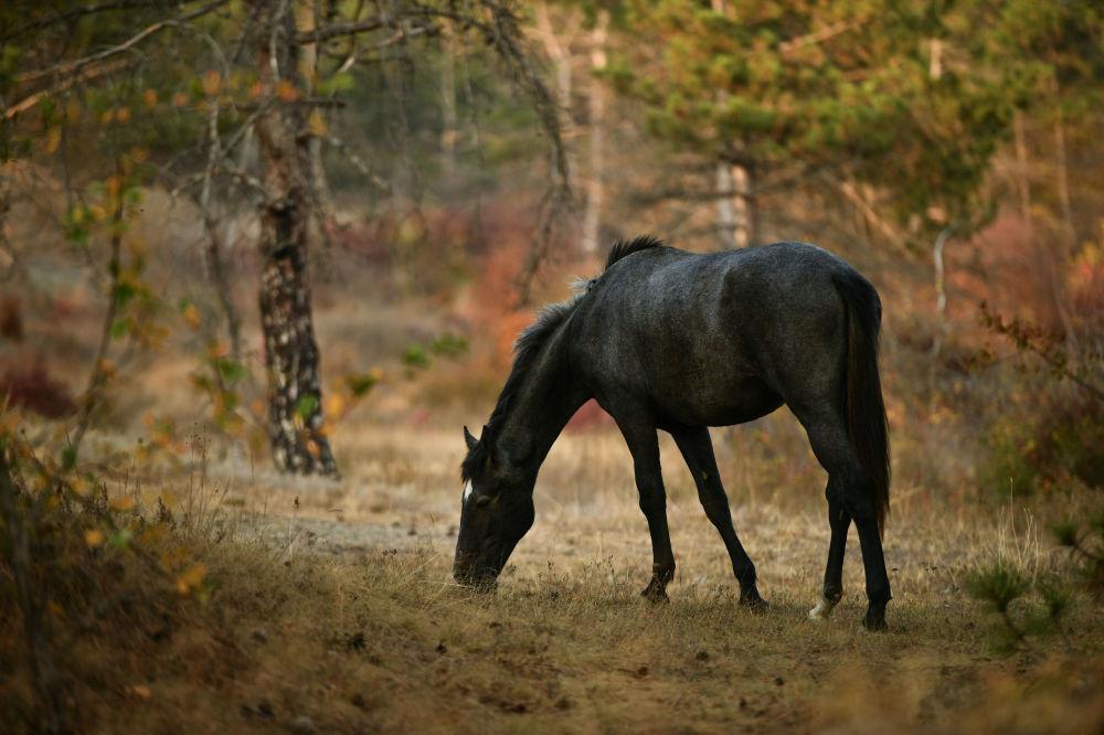 Koń w Symferopolu na Półwyspie Krymskim
