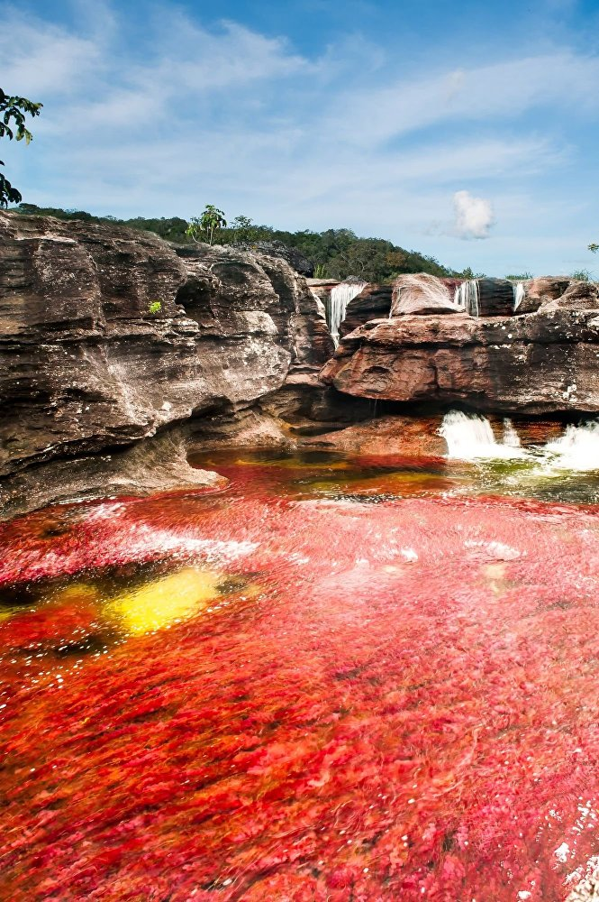Rzeka Caño Cristales w Kolumbii