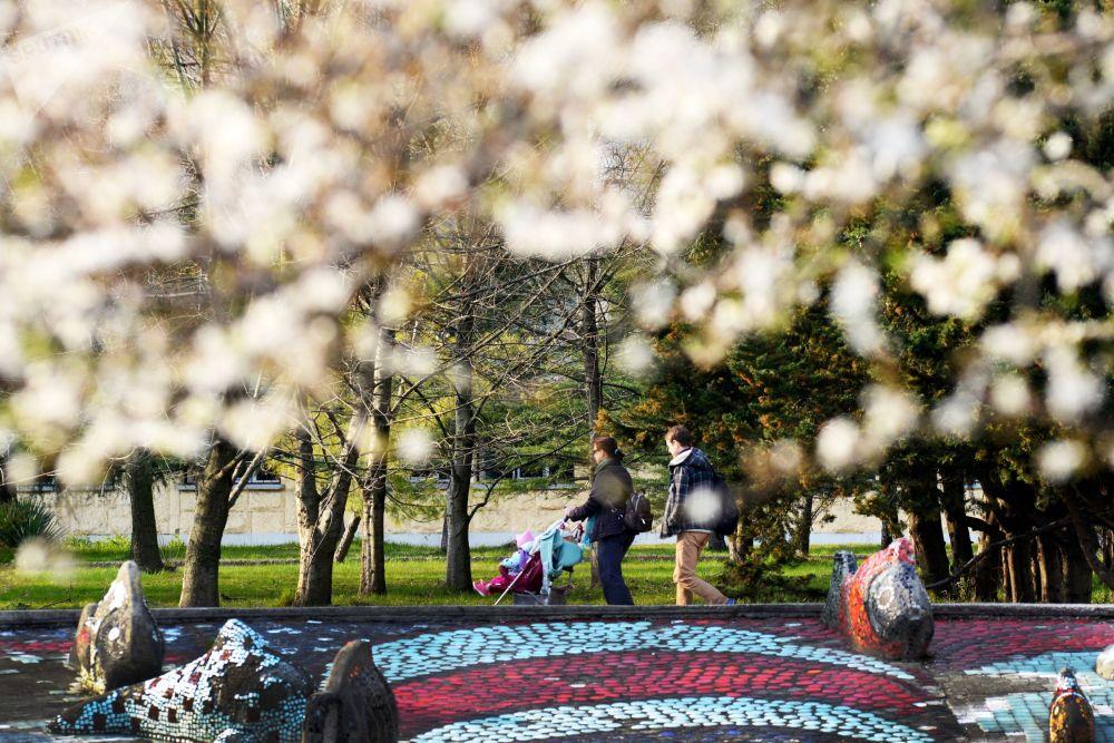 Wiosna w Soczi