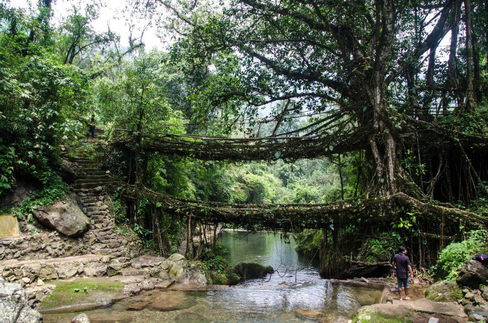 Most z roślin w Indiach