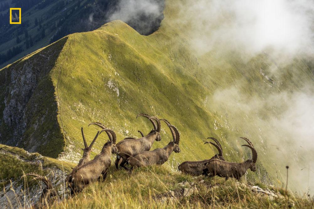 Fotograf Jonas Schäfer zdobył Nagrodę Publiczności w nominacji Nature