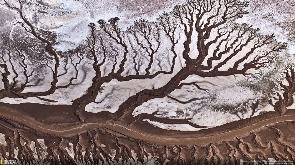 Fotograf Stas Bartnikas zdobył Nagrodę Publiczności w nominacji Nature