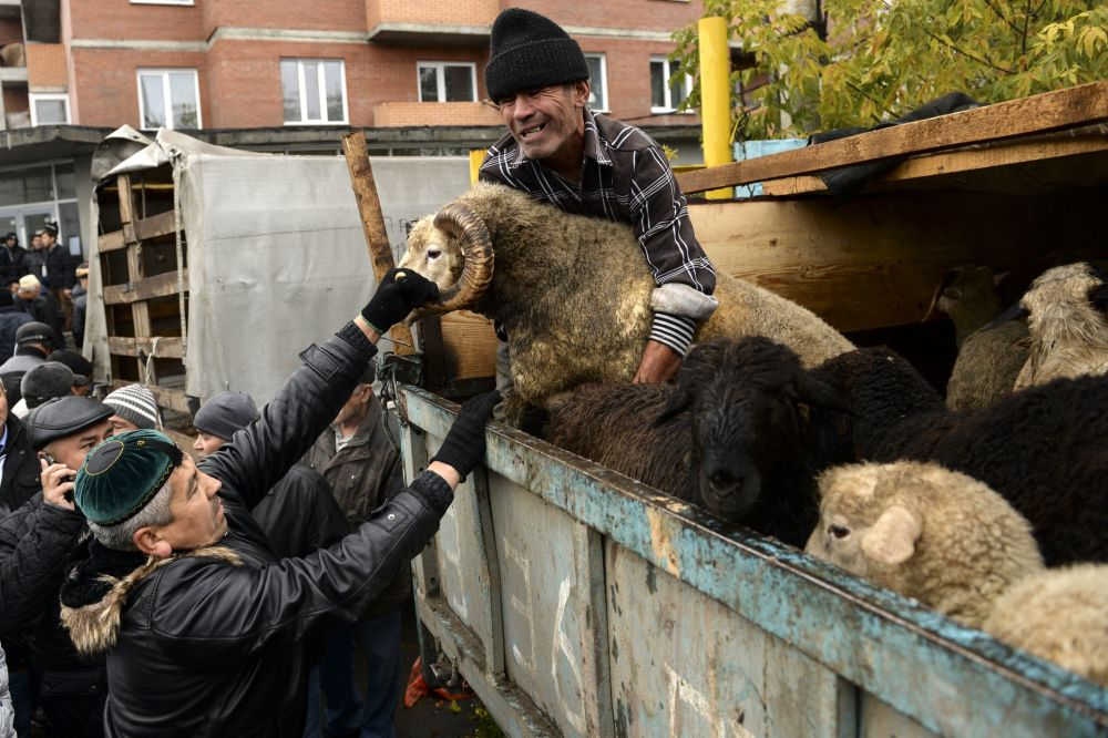 Sprzedaż baranów podczas obchodów Id al-Adha przy Meczetu Katedralnym w Nowosybirsku
