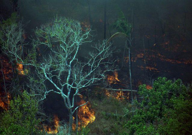 Pożary w Amazonii, zdjęcie archiwalne z 1998 roku