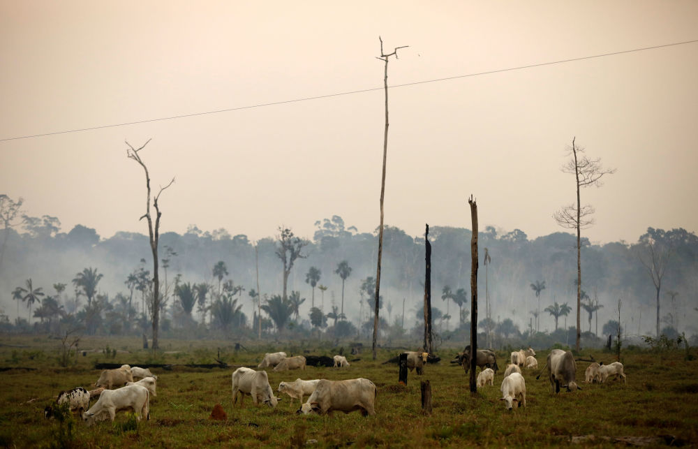 Pozbawione lasów tereny w National Forest Bom Futuro, Brazylia.