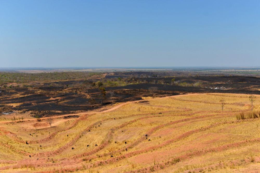 Wypalony fragment lasu wykorzystywane jako pastwiska w Brazylii.