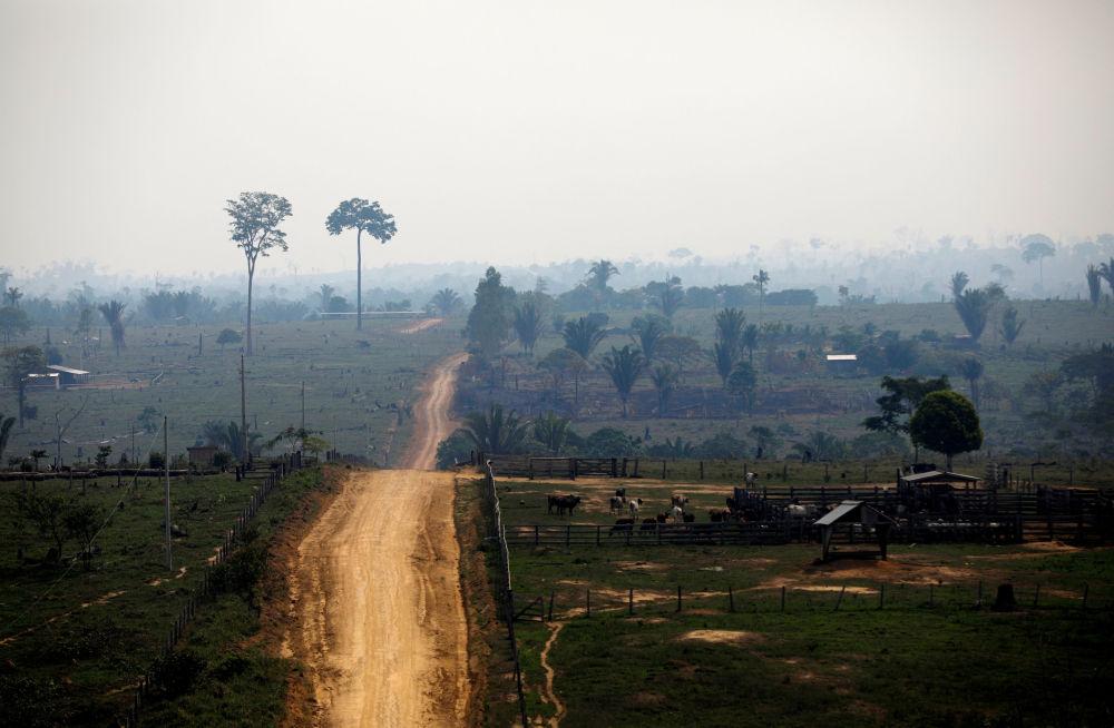 Teren pozbawiony lasów w National Forest Bom Futuro, Brazylia.