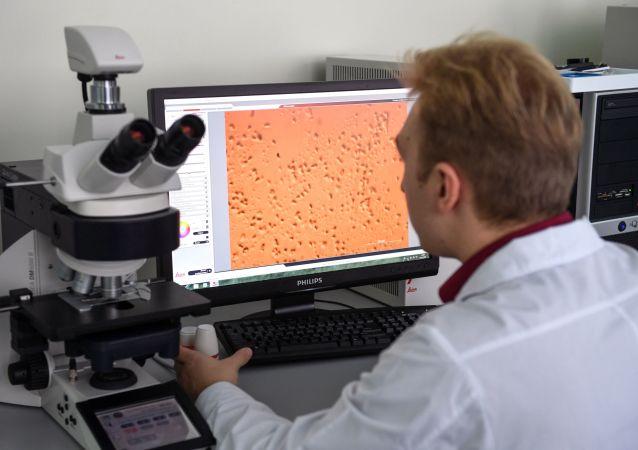 Pracownik Instytutu Biologii Fundamentalnej i Biotechnologii Syberyjskiego Uniwersytetu Federalnego bada pod mikroskopem bakterie