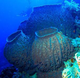 Gąbka morska