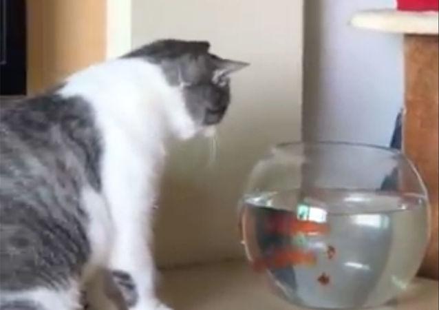 Kot i złote rybki