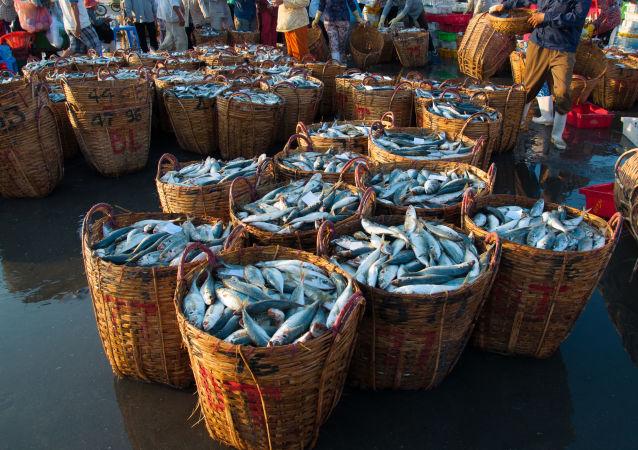 Rybny rynek