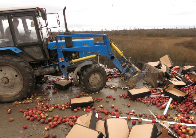 Niszczenie polskich jabłek w obwodzie kaliningradzkim