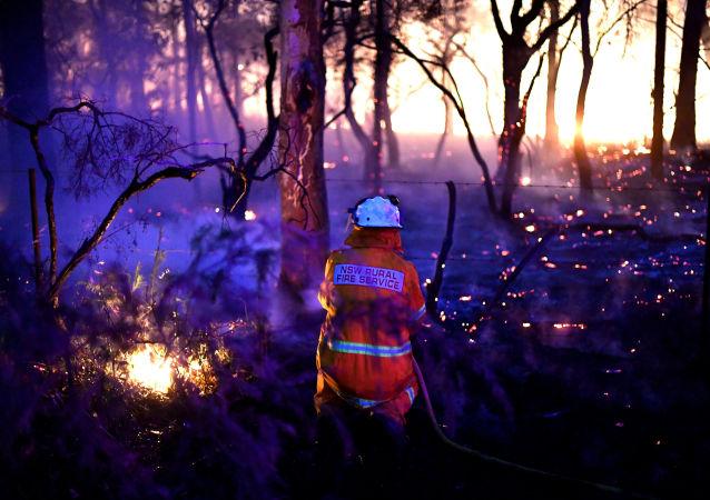 Pożary lasów w Australii