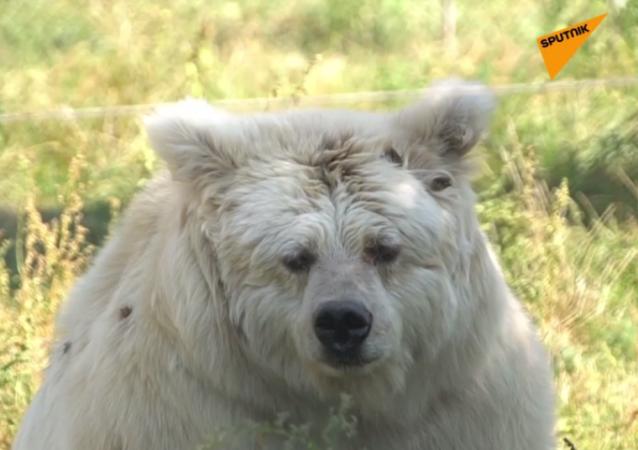 Schronisko dla niedźwiedzi