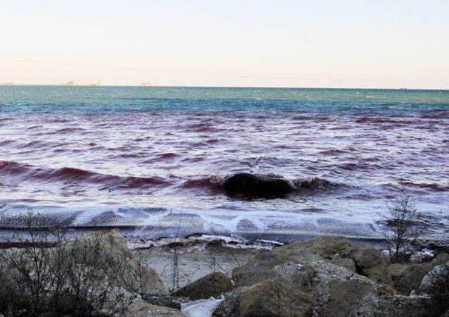Czerwona woda u wybrzeża morza Kaspijskiego w Aktau, Kazachstan
