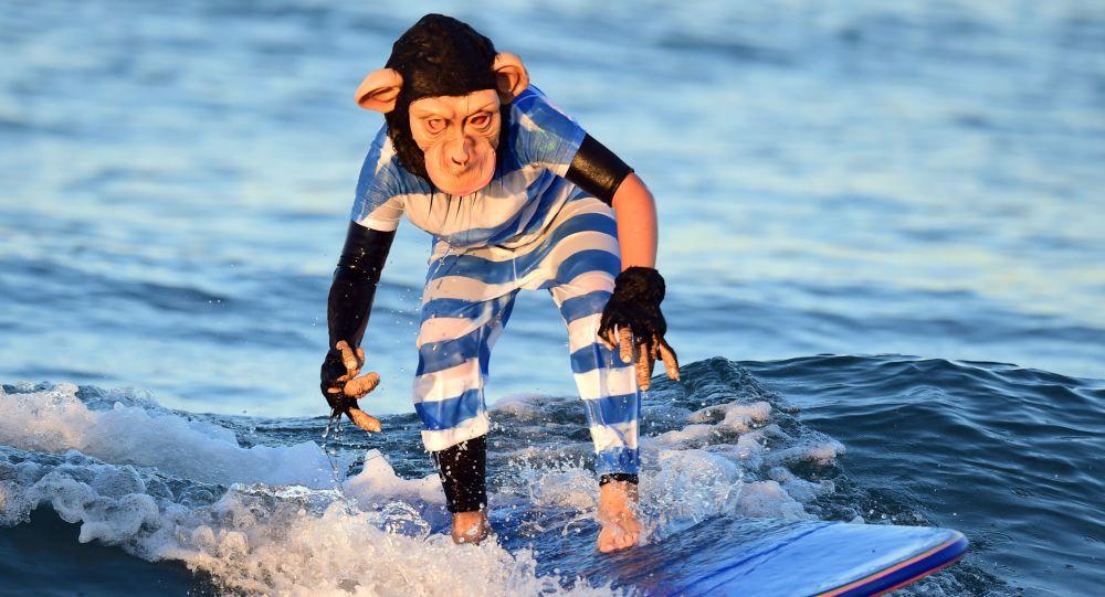 Surfer ubrany jako szympans nad oceanem w Kalifornii