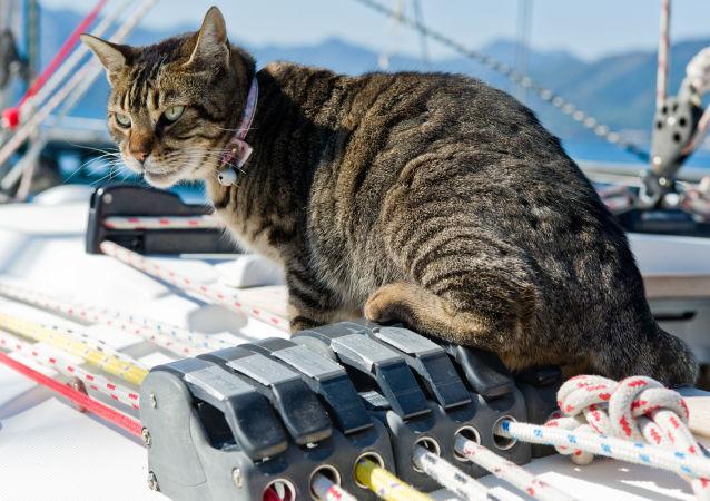 Kot na pokładzie jachtu