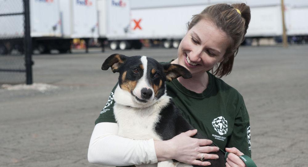 Dziewczyna głaszcze psa na lotnisku w Soczi, Rosja