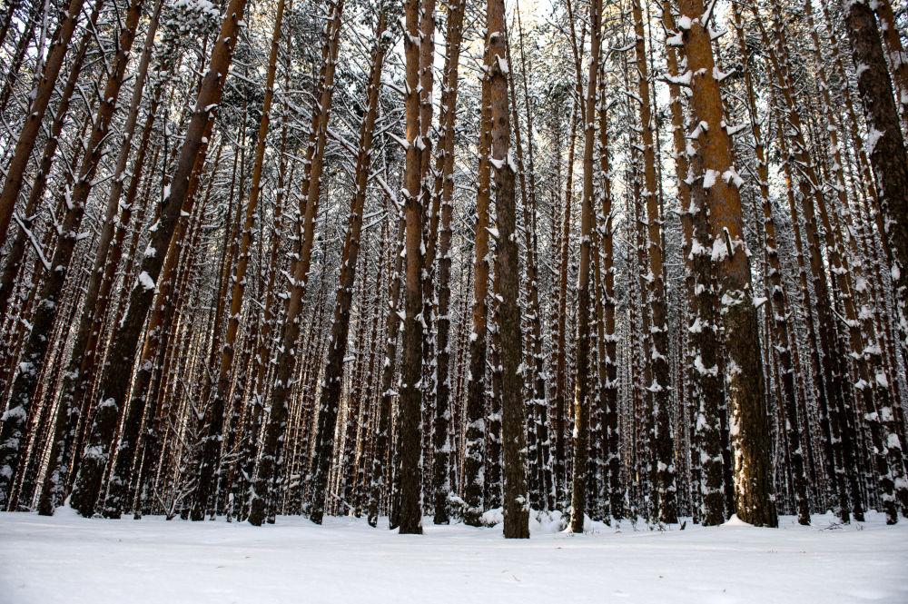 Zimowy las na wsi Atak dzielnicy Tarskiej