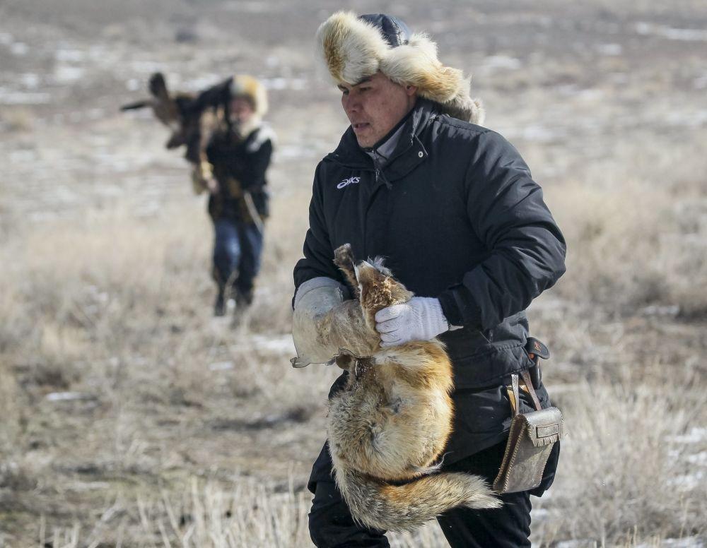 Myśliwy trzyma lisa, którego złapał orzeł podczas tradycyjnych zawodów myśliwskich w miejscowości Nura w Kazachstanie