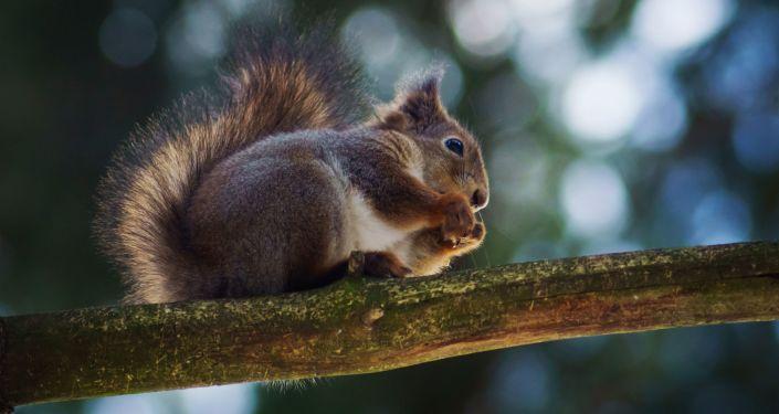 W trakcie przedterminowego głosowania w wyborach prezydenckich w stanie Ohio (USA) doszło do zwarcia, które wywołała wiewiórka