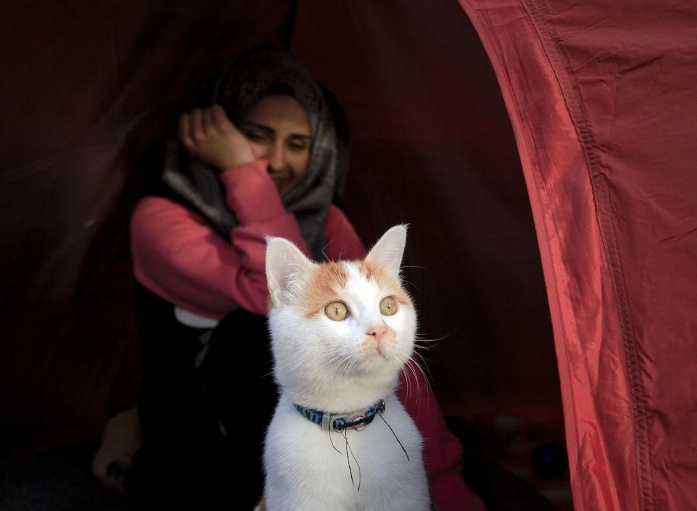 Kot przy namiocie na granicy grecko-macedońskiej