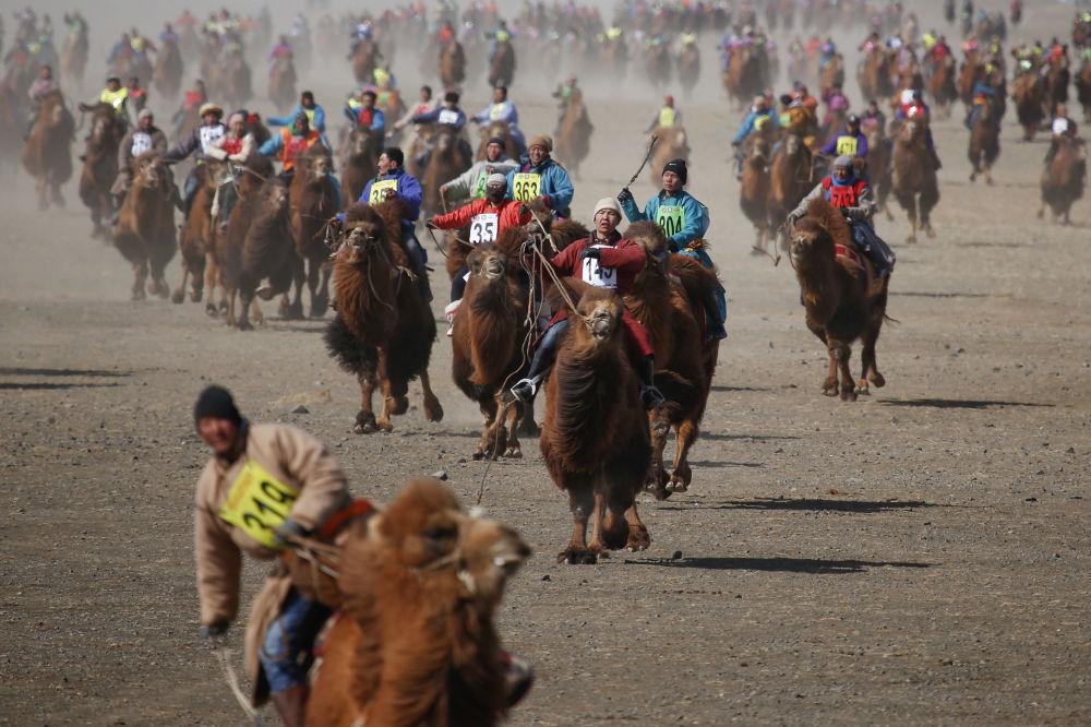 Uczestnicy wyścigu na wielbłądach w Mongolii