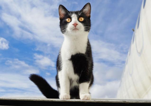 """Rogozin zdradził tajemnicę """"specjalnie wyszkolonych kotów"""" w zakładach lotniczych"""