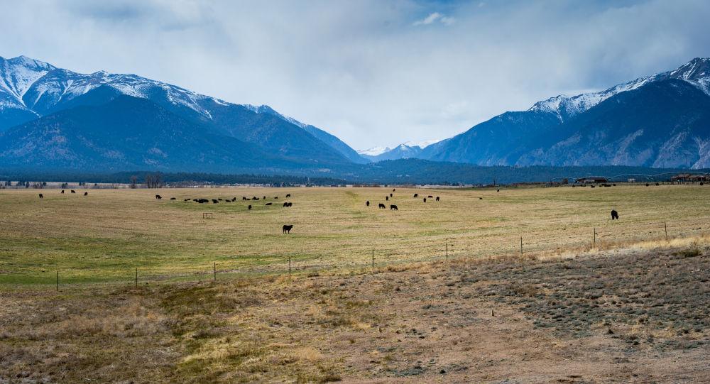 Pastwiska krów w Australii