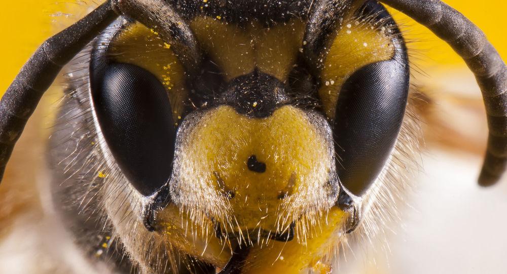 Ogromny rój pszczół zatrzymał ruch w centrum Londynu