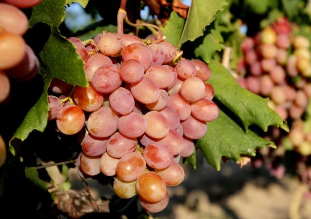 Krymskie winogrona