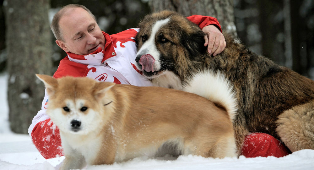 Prezydent Rosji Władimir Putin na wycieczce z psami, 23 marca 2014