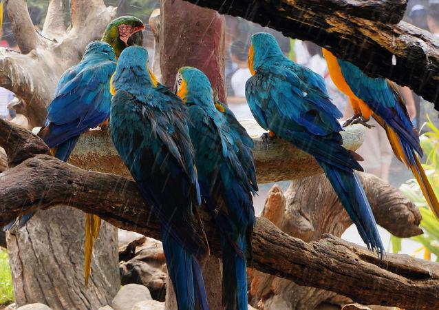 Papuga ara w ogrodzie zoologicznym