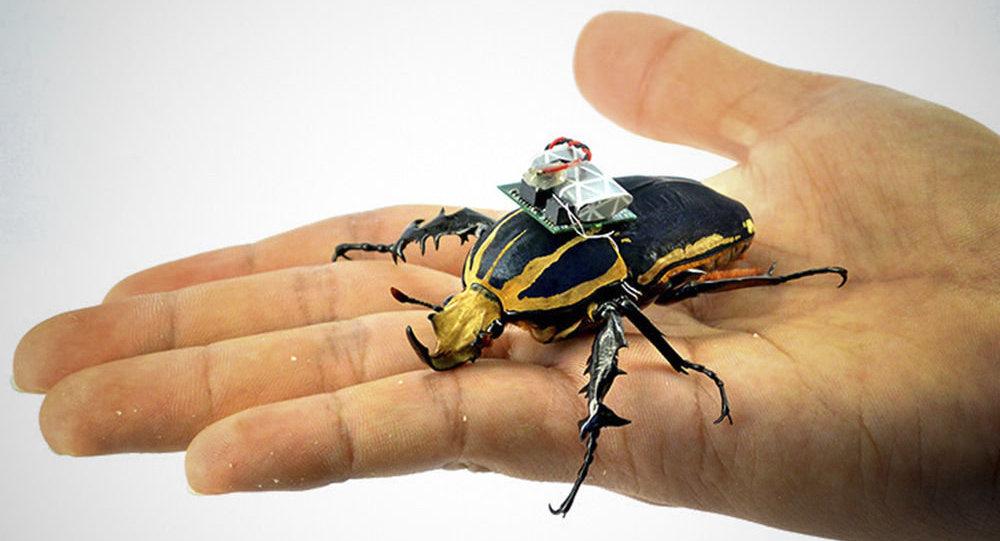 """Specjalny """"cyberplecak"""" dla chrząszczy"""