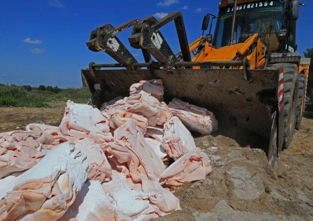Likwidacja objętej sankcjami zwrotnymi polskiej słoniny (obwód kaliningradzki)