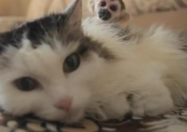 Rosyjska kotka zaadoptowała małpkę