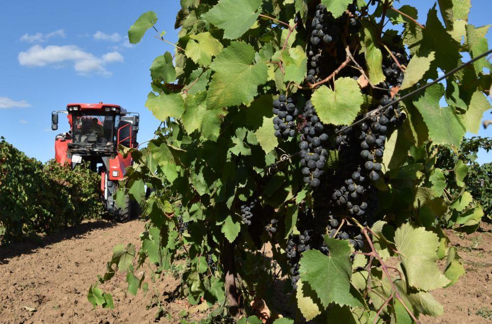 Produkcja wina w obwodzie rostowskim