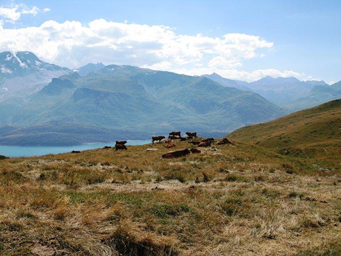 Od czasu do czasu ciszę przerywa dochodzący z oddali melodyjny dźwięk dzwoneczków pasących się na górskich łąkach krów.