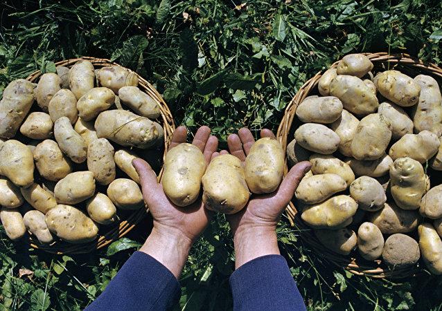 Ziemniaki.