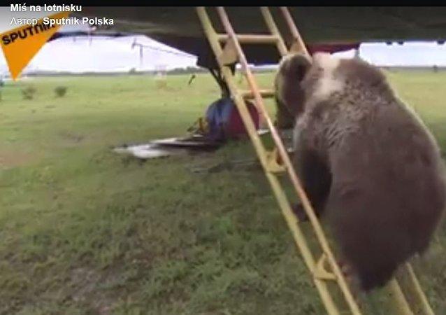 Niedźwiadek Mansur mieszka stał się miejscową atrakcją...