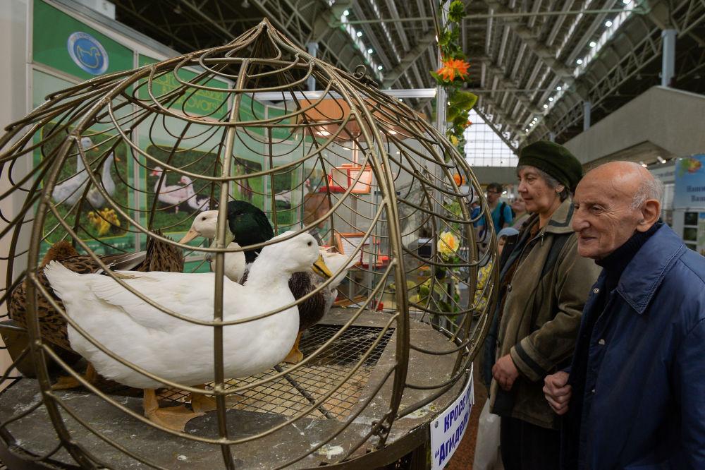 Wiktor Siemionow, w latach 1998-1999 zajmujący stanowisko ministra rolnictwa Rosji, uważa, że Rosja może być dumna z sektora hodowli ptactwa, który robi wrażenie również na Zachodzie.