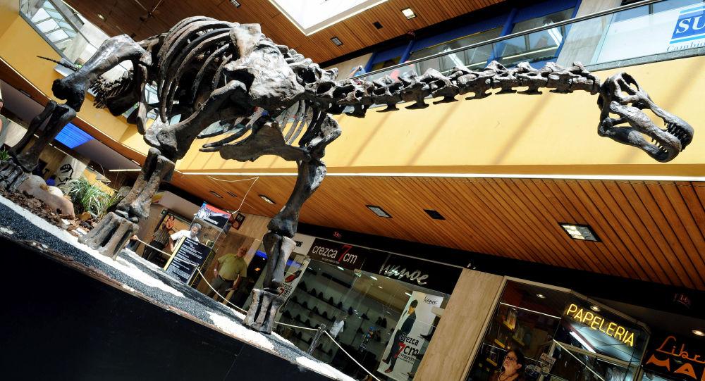Kopia szkieletu tytanozaura w Kolumbii